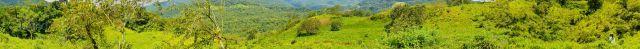 Rolling green organic hills