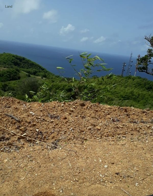 Goodwood Tobago 1