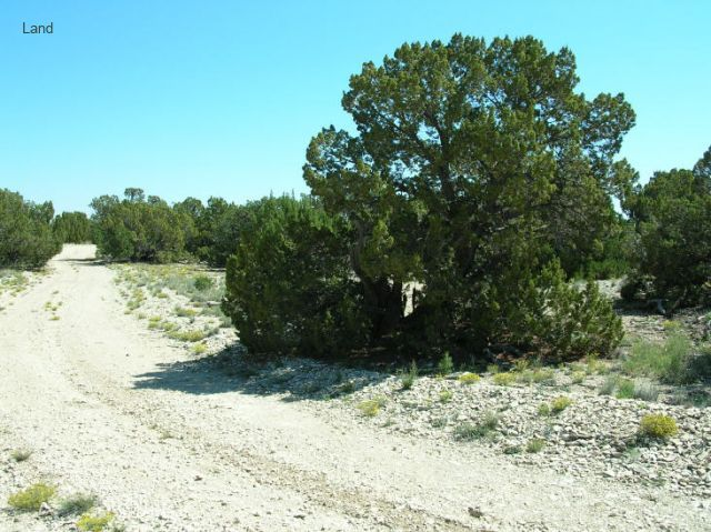 35 Acre Ranch - Colorado - Hunting, Wildlife & Peace